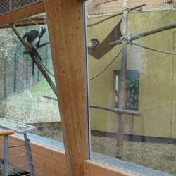 Vollverglasung am Affengehege.